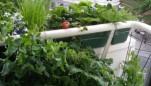 Hortas caseiras são úteis e ainda dão charme à decoração